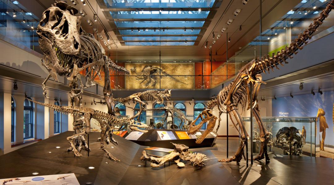 Natural History Museum Aug 2011  Job 5740