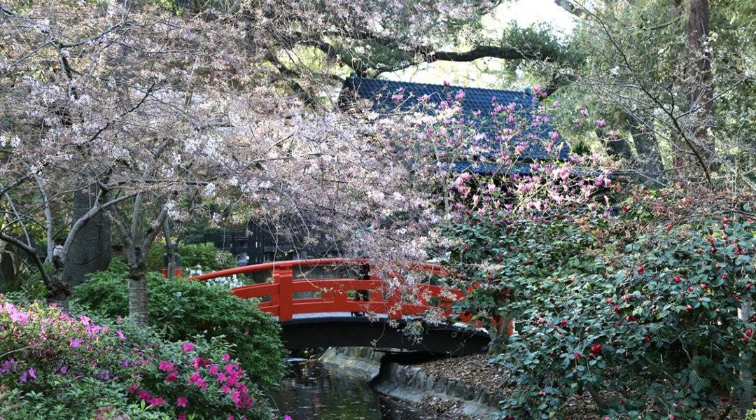 Japanese Garden © Descanso Gardens - Public Relations
