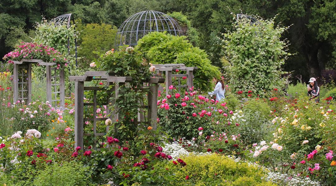Rose Garden © Descanso Gardens - Public Relations