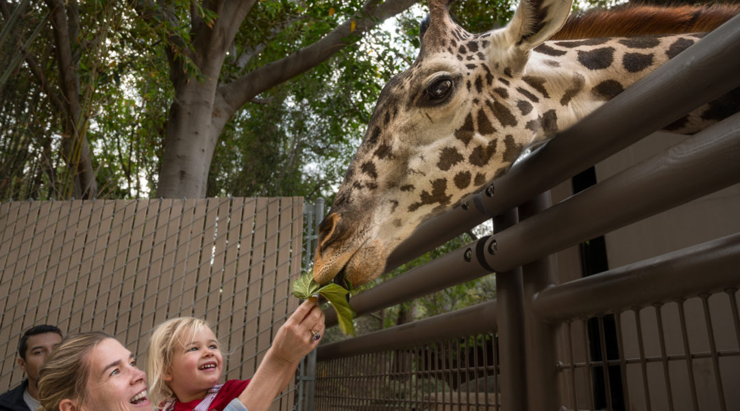 Giraffe Feeding JEP_4588 - Sienna Spencer